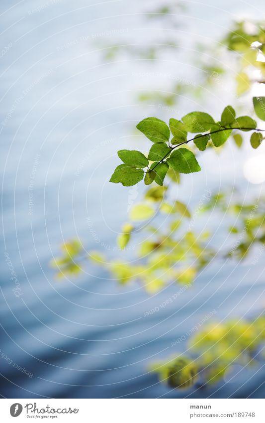 verweile... harmonisch Wohlgefühl Zufriedenheit Erholung ruhig Gartenarbeit Natur Wasser Frühling Sommer Herbst Schönes Wetter Blatt Zweige u. Äste Park Wellen
