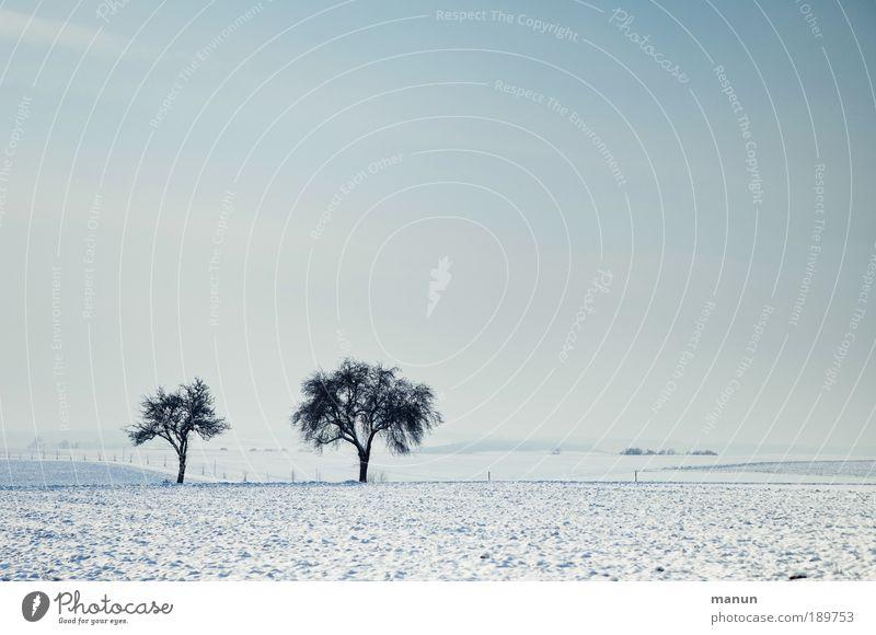 Gemeinsam einsam Erholung Winterurlaub Natur Landschaft Schönes Wetter Eis Frost Schnee Baum Schneelandschaft Schneedecke Feld frei frisch kalt Gelassenheit