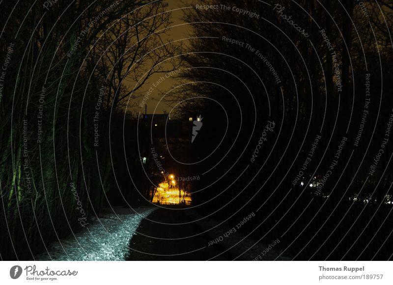 Am Ende orange Umwelt Landschaft Himmel Nachthimmel Winter Eis Frost Schnee Pflanze Baum Feld Stadtrand Menschenleer Verkehrswege Wege & Pfade Wegkreuzung