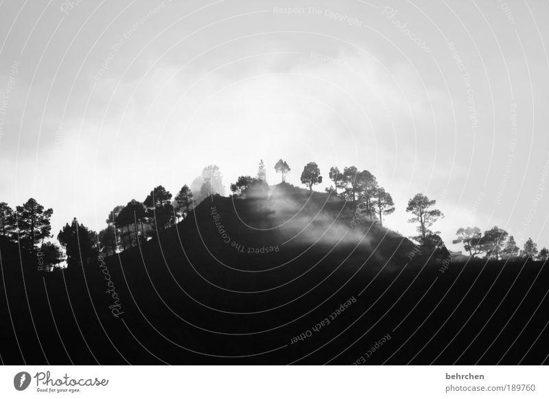 kontrast Ferien & Urlaub & Reisen Tourismus Ausflug Ferne Freiheit Umwelt Natur Landschaft Himmel Wolken Klimawandel Wetter Nebel Baum Meer Insel Zufriedenheit