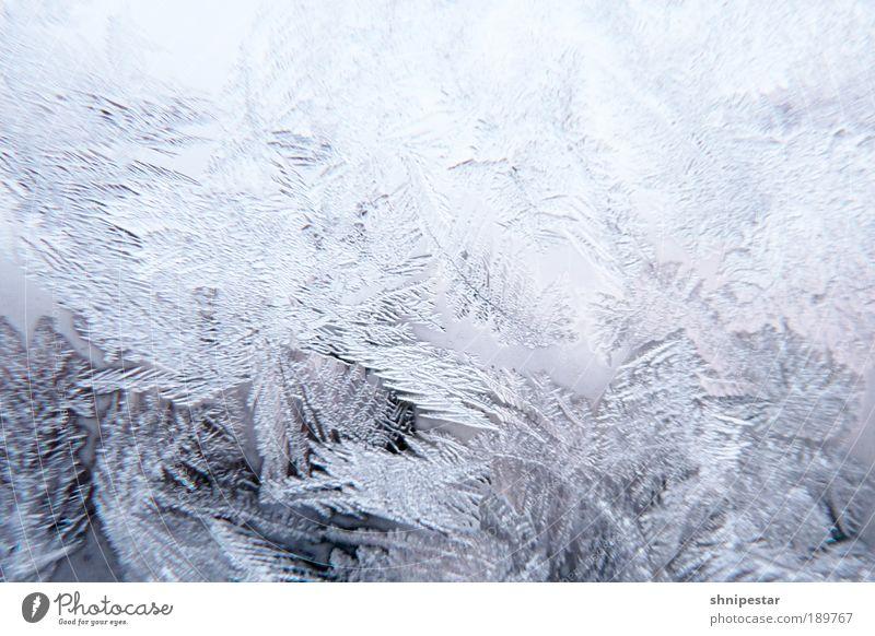 Arschkalt in Berlin II Natur Wasser weiß blau Winter Schnee Fenster Wetter Eis Glas Wassertropfen ästhetisch Klima Energiewirtschaft Coolness