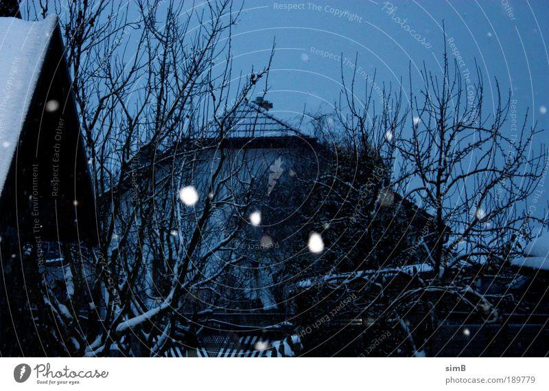 schneeflocken Winter Wetter Eis Frost Schneefall Baum Garten Österreich Dorf Haus Stimmung Schneeflocke Farbfoto Außenaufnahme Menschenleer Dämmerung
