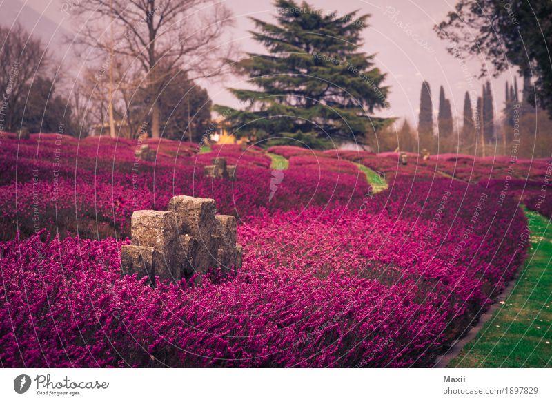 Friedhof, Lavendel, Italien, Gedenkstätte Weitwinkel Starke Tiefenschärfe Kontrast Silhouette Außenaufnahme mehrfarbig Farbfoto Abenteuer Natur Umwelt
