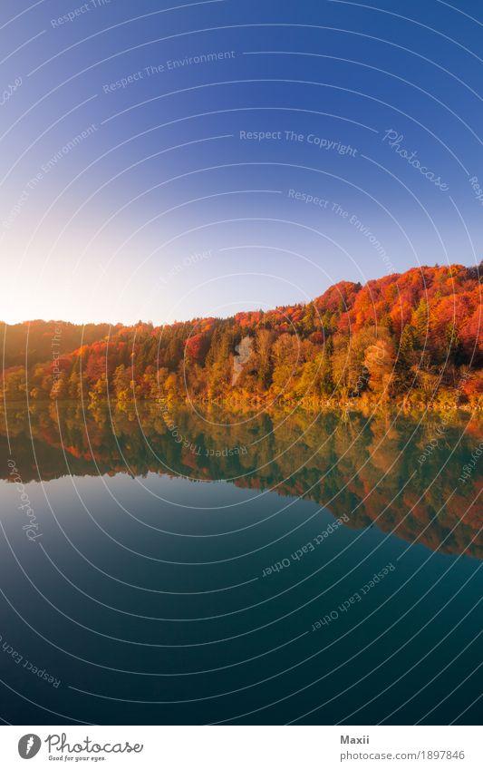 Herbst am Inn Umwelt Natur Landschaft Wasser Himmel Wolkenloser Himmel Sonnenlicht Schönes Wetter Baum Wald Fluss glänzend blau mehrfarbig gelb gold Farbfoto
