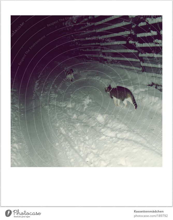 Let it snow! Schnee Katze Freundschaft Fröhlichkeit Spaziergang Tier Natur