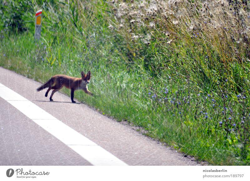 Road Trip Natur grün Pflanze rot Tier Straße Wiese Glück Wege & Pfade Landschaft braun Angst gehen Umwelt nah authentisch