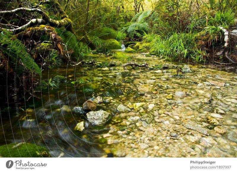 Kleiner Bach in Neuseelands Regenwäldern II Umwelt Natur Landschaft Pflanze Wasser Sommer Herbst Klima Baum Gras Sträucher Moos Farn Blatt Grünpflanze