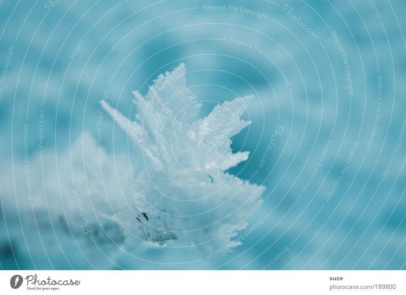 Eis am Stiel Natur blau schön Winter kalt Schnee Eis außergewöhnlich natürlich authentisch Coolness Frost Ast einzigartig rein gefroren