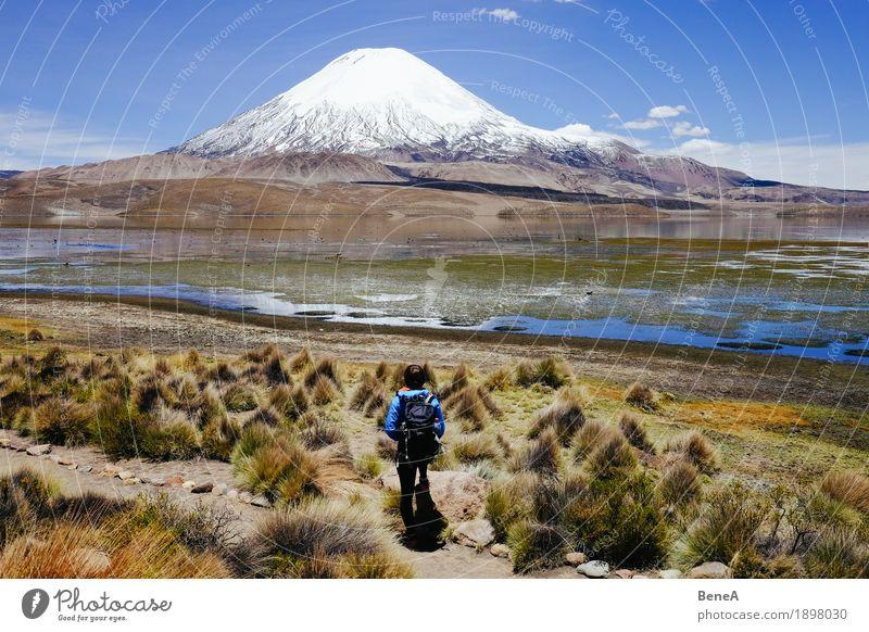 Standing in front of Parinacota Mensch Frau Erwachsene Natur Erholung Ferien & Urlaub & Reisen Umwelt Chile Nationalpark Vulcano Höhe Höhenmeter grün wandern