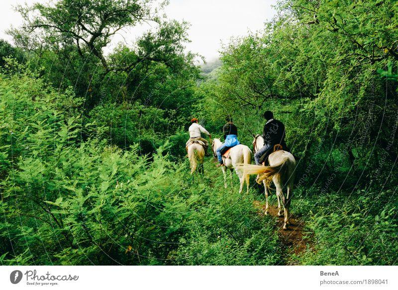 Reiter mit Pferden reiten durch Urwald in Argentinien Ferien & Urlaub & Reisen Sightseeing Mensch Natur exotisch Freizeit & Hobby Freude Tradition Outback Tier