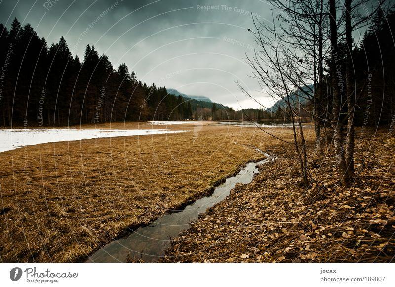 Rückzug [450] Natur Wasser weiß Baum Pflanze Winter Wolken Wald dunkel Schnee Herbst Landschaft braun Bach Grünpflanze schlechtes Wetter