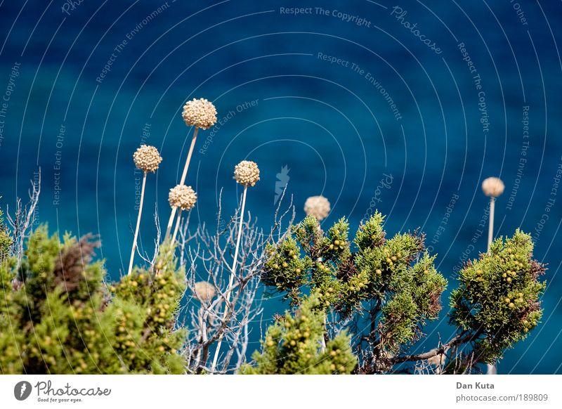 300 – Das Blumiläum! Natur Pflanze blau Sommer Wasser Blume Meer Landschaft Umwelt Gras Glück Zufriedenheit Wachstum authentisch Sträucher Fröhlichkeit
