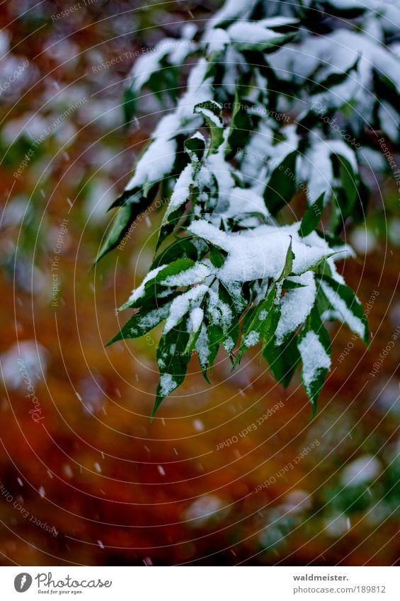 Strauch im Winter Baum Pflanze Blatt ruhig Schnee Eis ästhetisch Sträucher Frost