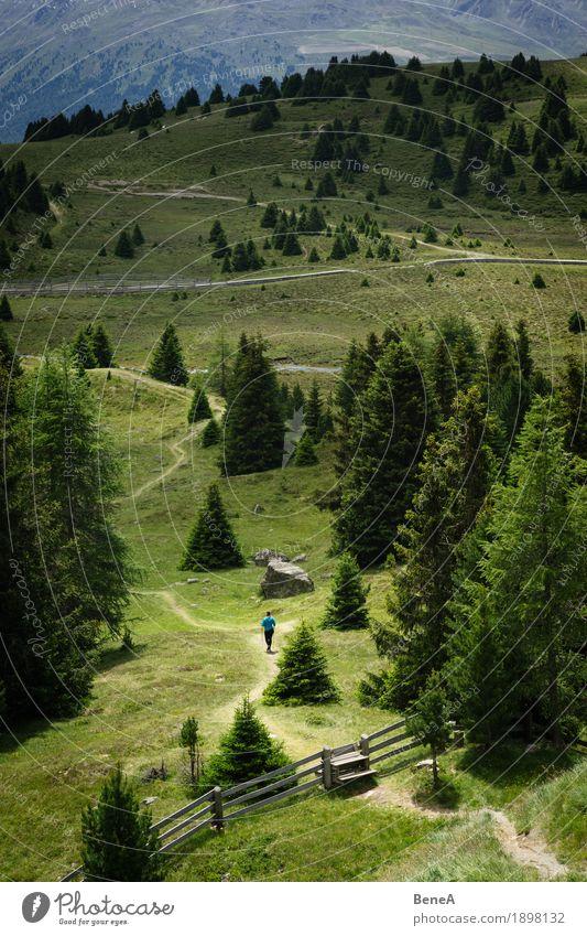 Frau wandert durch den Plamorter Boden, Vinschgau, Italien Mensch Natur Moor Sumpf gehen wandern Abenteuer Zufriedenheit Erholung Fitness Freiheit