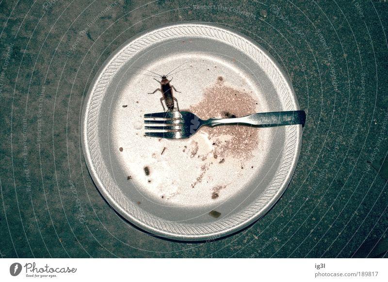 Nahrungskette Ernährung Teller Gabel Natur Käfer 1 Tier füttern Appetit & Hunger Ekel Armut bizarr Energie Freiheit Zufriedenheit skurril sparsam Tabubruch