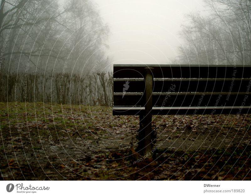 Ruhe Natur Baum Pflanze Ferien & Urlaub & Reisen Wolken Winter ruhig Ferne Wald Erholung Freiheit Landschaft Umwelt Regen Park Kunst