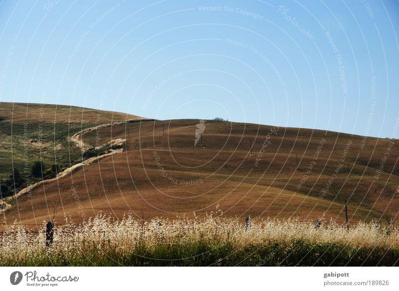 running up that hill Himmel Natur blau Pflanze Sommer Freude Erholung Landschaft Umwelt Gras Glück Wege & Pfade braun Erde Feld Zufriedenheit