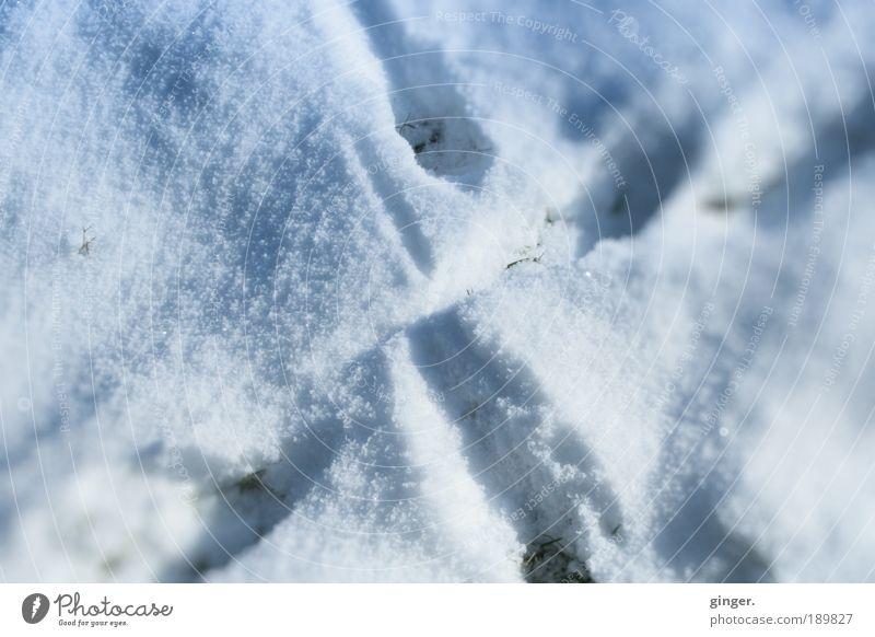 X-Trails Natur weiß Winter Umwelt kalt Schnee Wege & Pfade Eis Frost Spuren geheimnisvoll Kreuz frieren gekreuzt grau-blau