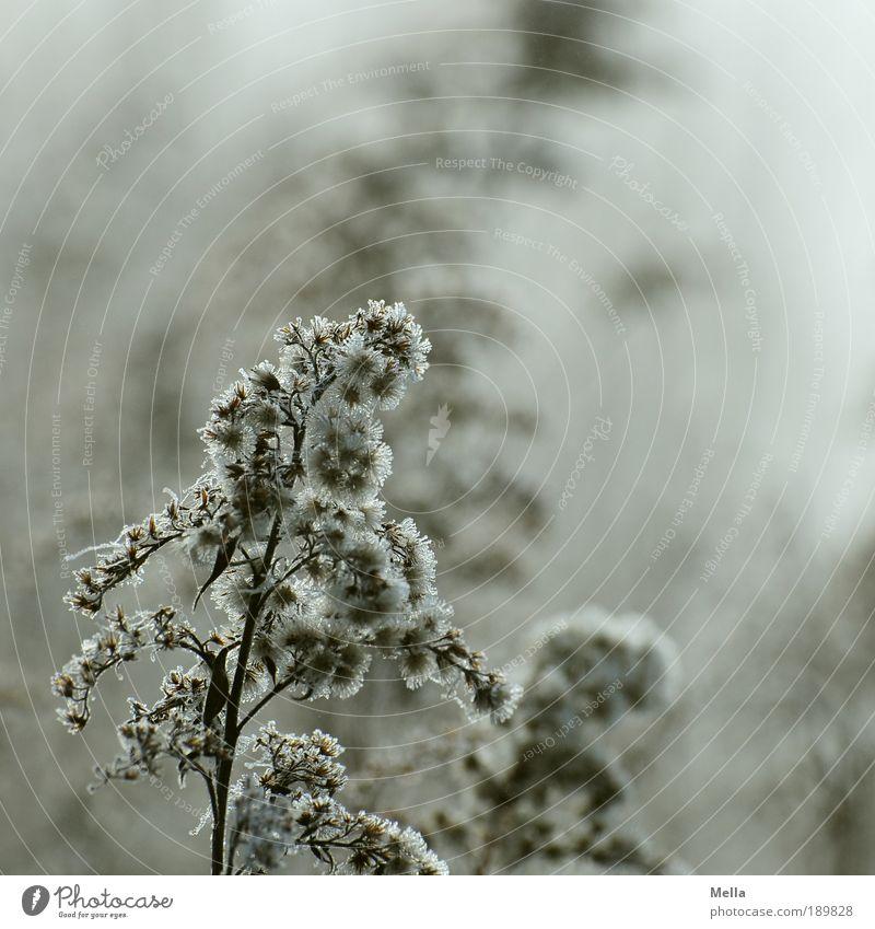 Winterstaude Natur Pflanze kalt Wiese Gras Traurigkeit Eis Stimmung braun Feld Umwelt Wachstum trist Frost Klima Vergänglichkeit