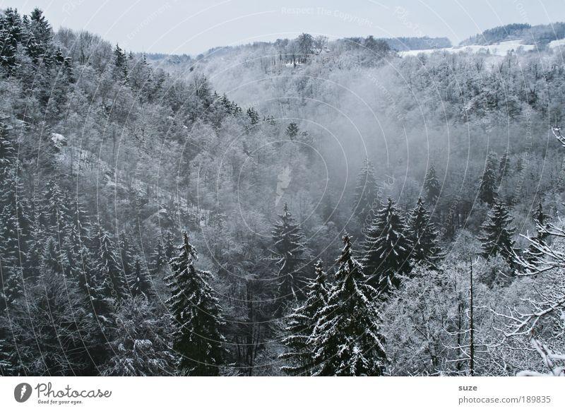 Geisterwald III Himmel Natur weiß Pflanze Baum Einsamkeit Winter Landschaft Wald Umwelt dunkel kalt Schnee Luft Eis Wetter