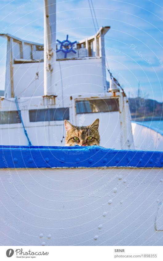 Katze an Bord Tier Haustier Ferien & Urlaub & Reisen Bulgarien Sozopol Alleenkatze hinauskriechen hinauskriechend Hauskatze versteckend outbred Reinrassig