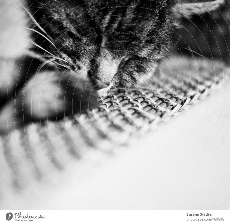 Erholung Katze alt Tier träumen liegen Nase schlafen Häusliches Leben Fell Haustier Schwarzweißfoto Krallen Tierliebe Tigerfellmuster Katzenkopf Tigerkatze