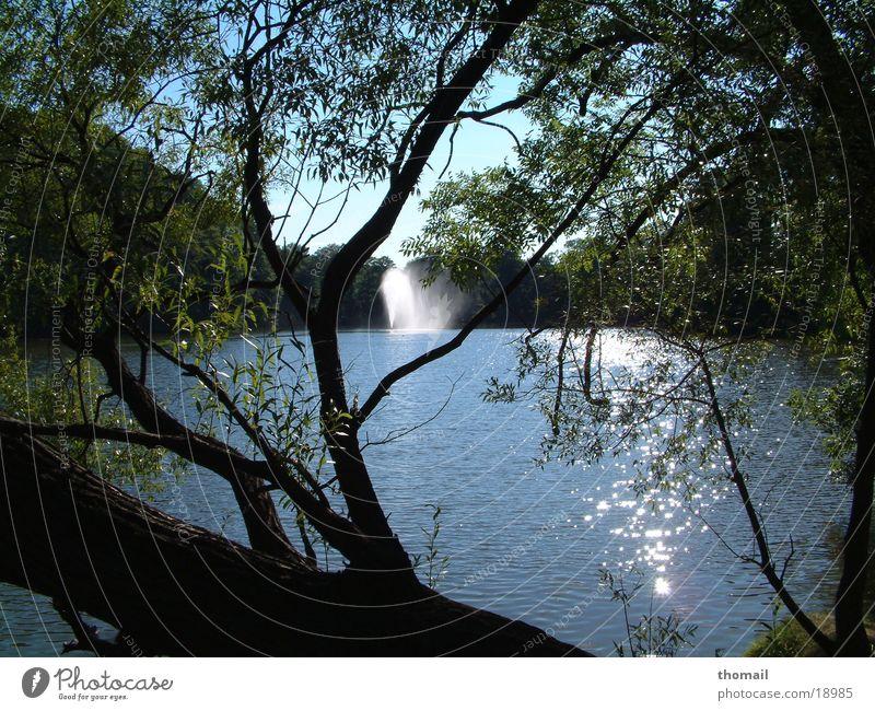 Teich mit Fontäne Wasser Sommer See frisch Spaziergang Schönes Wetter Teich Gewässer Springbrunnen Wasserfontäne