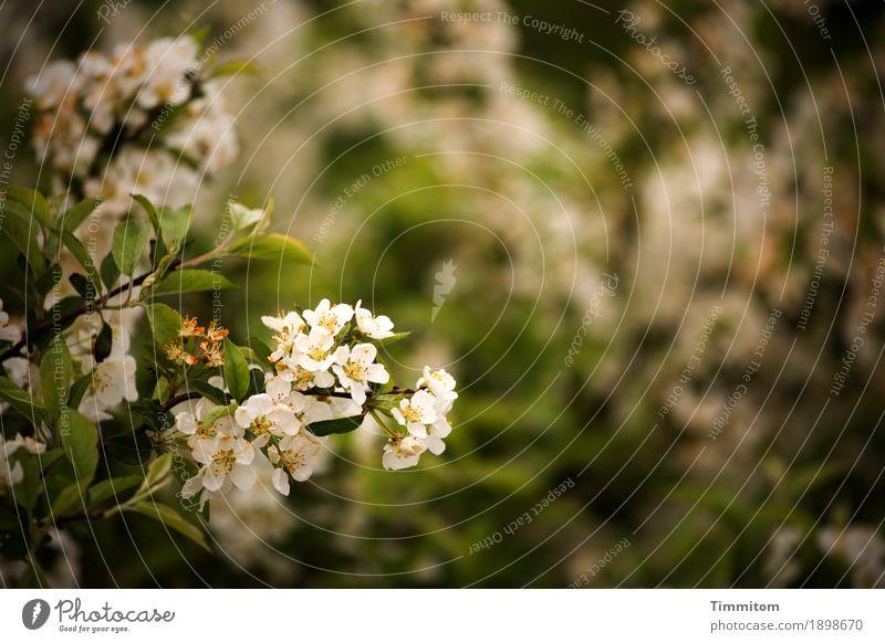 Orientierung | Analoge Foto-Zeiten Umwelt Natur Pflanze Frühling Sträucher Blatt Blüte Blühend Wachstum natürlich braun grün schwarz weiß erdig Retro-Farben