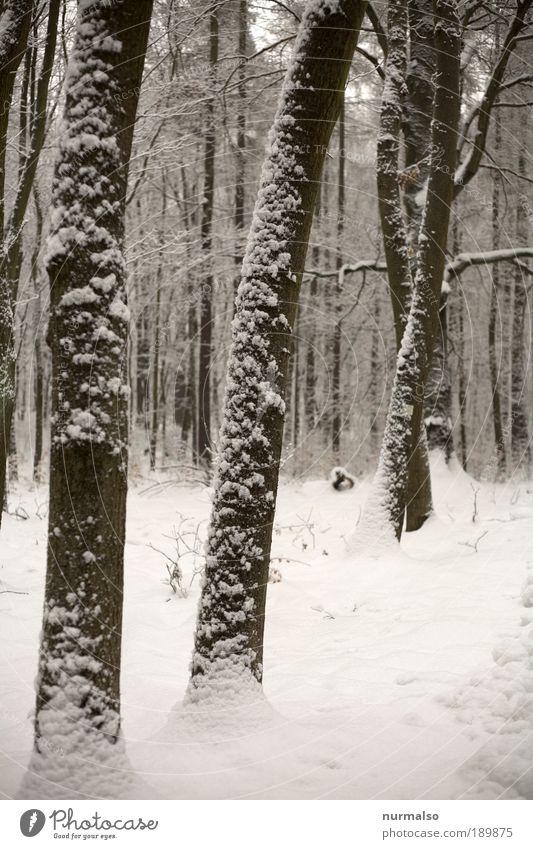 kalter Winterwald Natur Landschaft Wald dunkel Schnee Kunst Eis Wildtier Klima authentisch ästhetisch genießen Coolness fantastisch