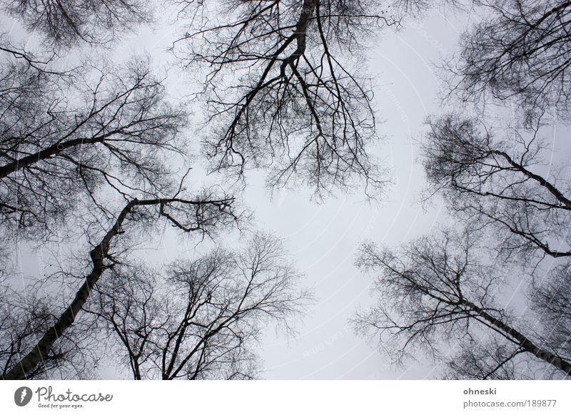 Vorfrühling Natur Himmel Baum Pflanze Winter Wolken Einsamkeit grau Traurigkeit Landschaft Luft Umwelt Trauer trist Ast abstrakt