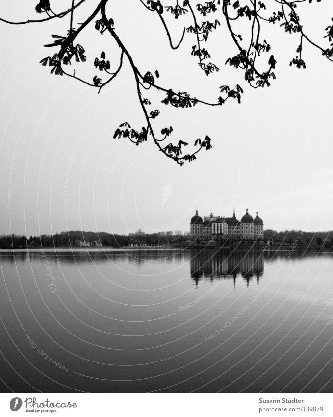 Drei Haselnüsse für Aschenbrödel schön alt Baum ruhig Haus Wald Blatt See Architektur Design Tourismus Romantik Kultur Dresden Spitze
