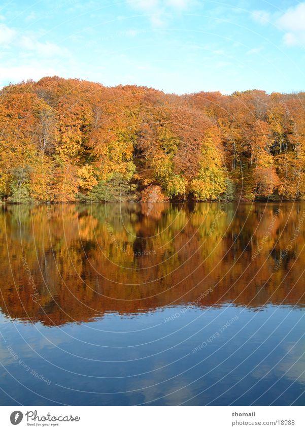 Herbstwald am See Wasser Blatt Farbe Wald Herbst See frisch Spaziergang Spiegel