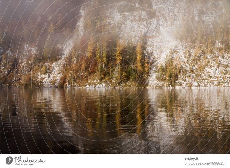 Steilküste Natur Landschaft Herbst Nebel Baum Felsen Berge u. Gebirge Seeufer Königssee Traurigkeit Trauer Klima Ferien & Urlaub & Reisen ruhig Symmetrie