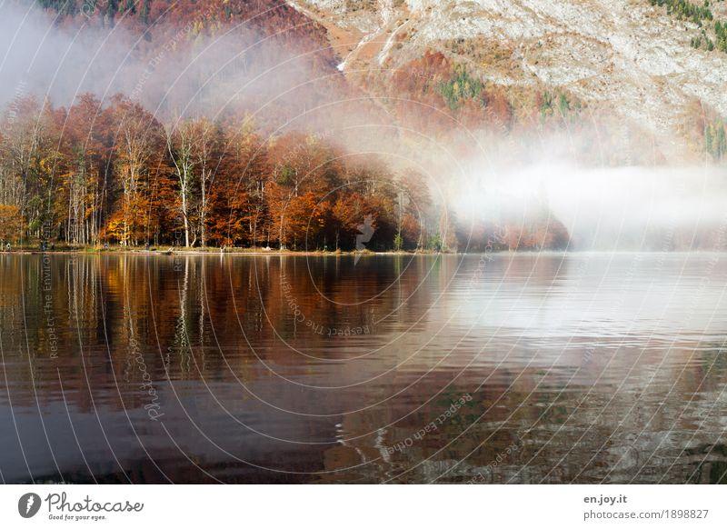 Herbstzauber Ferien & Urlaub & Reisen Natur Landschaft Nebel Wald Berge u. Gebirge Seeufer Königssee orange Traurigkeit Trauer Liebeskummer bizarr Idylle Klima