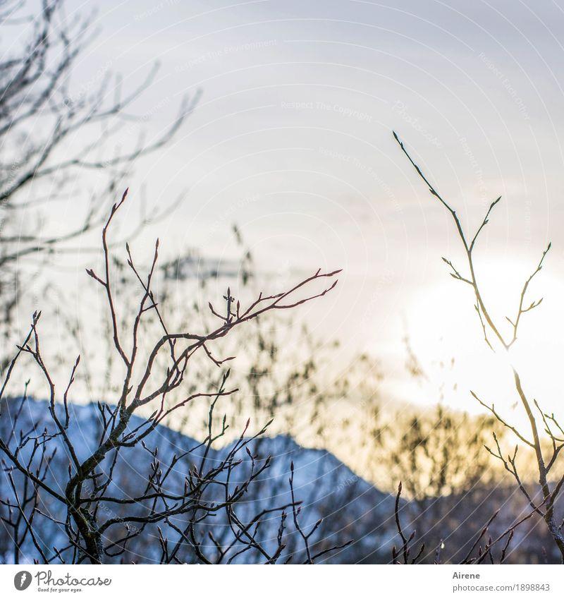 Ausblick mit Höhen und Tiefen Landschaft Himmel Sonnenaufgang Sonnenuntergang Sonnenlicht Winter Schönes Wetter Sträucher Zweige u. Äste Alpen Berge u. Gebirge