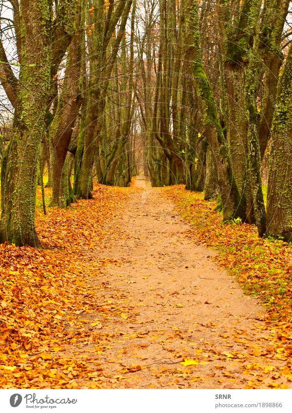Herbstgasse Garten Natur Landschaft Baum Blatt Park Wald natürlich gelb gold Gasse fallen November Oktober Szene Jahreszeiten Holz Farbfoto Menschenleer