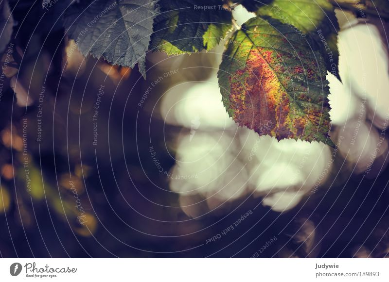 Farben Natur grün schön Baum Sommer Farbe Blatt ruhig Leben Herbst Park orange Romantik Schönes Wetter Pflanze