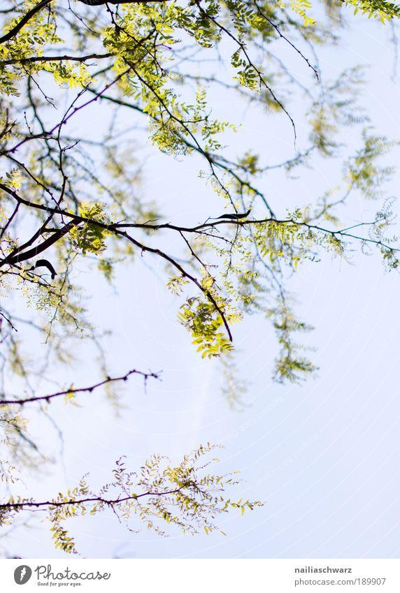 Frühling Himmel Natur blau grün Baum Pflanze Sonne Sommer Blatt schwarz Umwelt Landschaft Wärme Luft Park