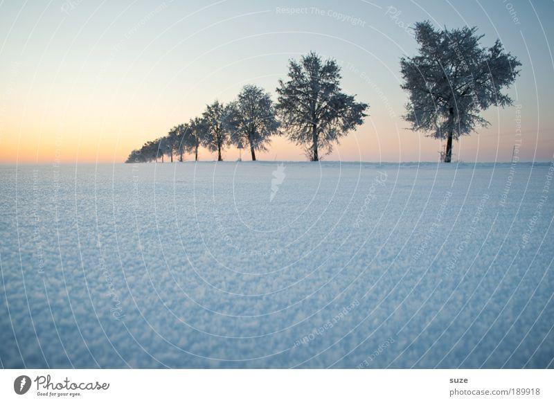 Baum in Folge Himmel Natur schön Pflanze Landschaft Winter kalt Umwelt Schnee Wege & Pfade natürlich Horizont Luft Eis Wetter