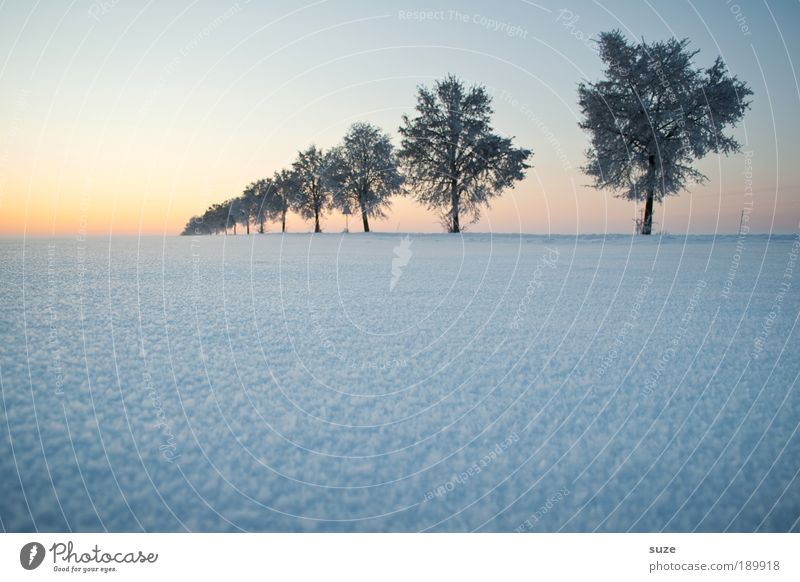 Baum in Folge Umwelt Natur Landschaft Pflanze Urelemente Luft Himmel Wolkenloser Himmel Horizont Winter Klima Wetter Nebel Eis Frost Schnee Wege & Pfade