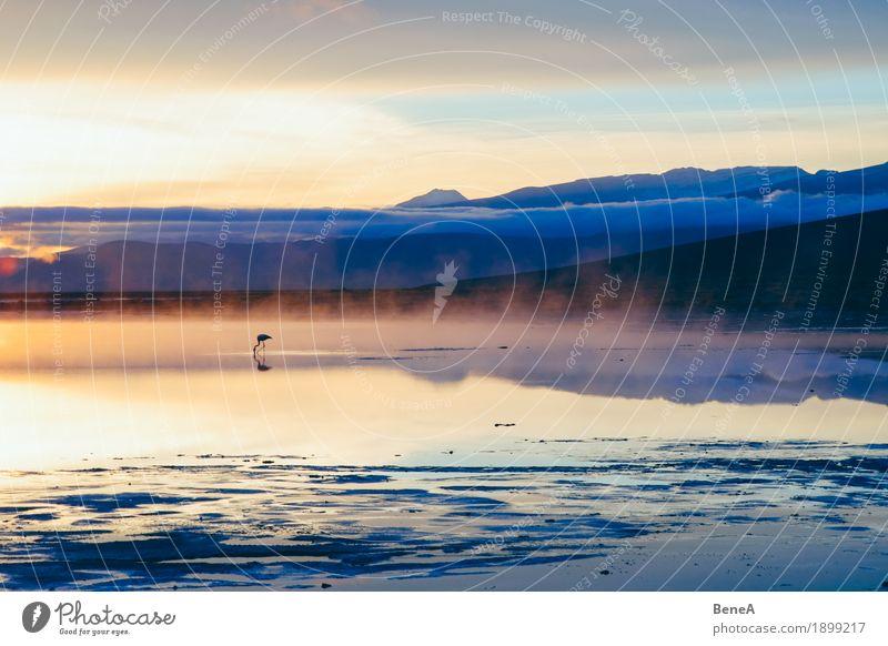 Flamingo in an Andean lake Natur Abenteuer Einsamkeit entdecken erleben exotisch Ferien & Urlaub & Reisen Umwelt Salt Lake Tier Vogel Wolken Fressen