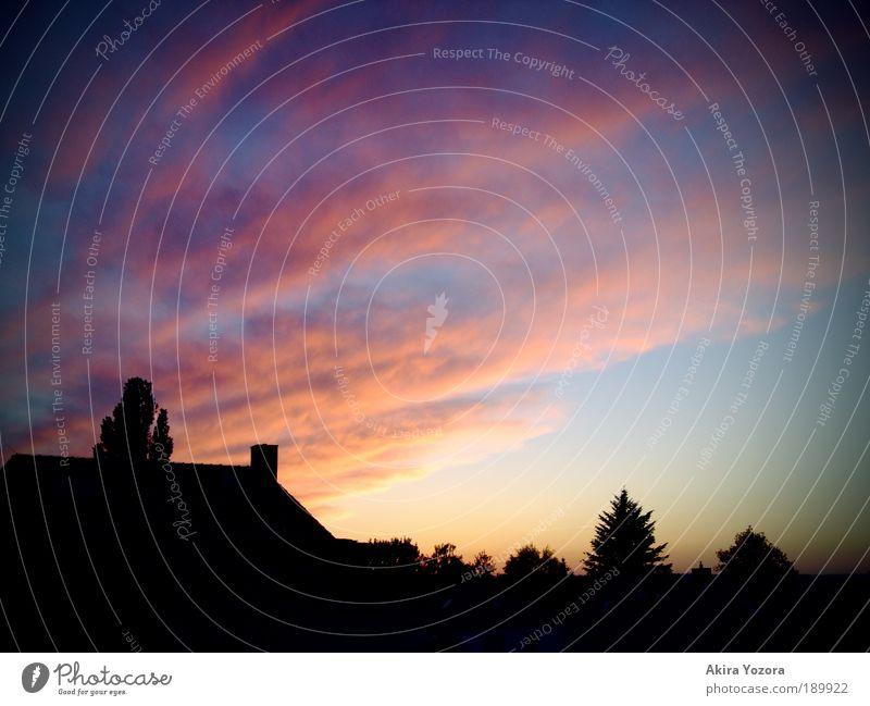 Die Nacht ruft Himmel Stadt blau Baum Erholung Einsamkeit Wolken schwarz gelb Gefühle natürlich rosa Horizont Wetter elegant ästhetisch
