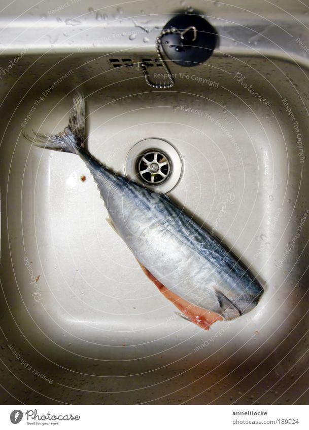 kopflos Tier Wohnung Wildtier Lebensmittel nass frisch Ernährung Dekoration & Verzierung Häusliches Leben Fisch Reinigen Kochen & Garen & Backen Küche Reichtum