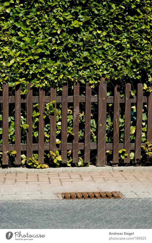 ###### Natur grün Pflanze Blatt Straße Garten Holz grau Stein Wege & Pfade braun Wohnung Umwelt Erde Sicherheit Sträucher