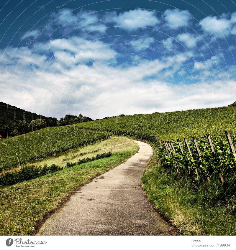Kultiviert Natur Pflanze Himmel Wolken Sommer Schönes Wetter Grünpflanze Feld Hügel Straße Wege & Pfade blau grün geduldig ruhig Weinberg anbauen Weingut