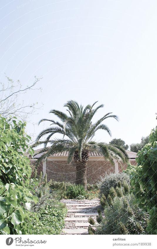 Deutsche Eiche Pflanze Wolkenloser Himmel Sommer Schönes Wetter Baum Palme Palmenwedel Garten Traumhaus Mauer Wand Dach ästhetisch exotisch schön einzigartig