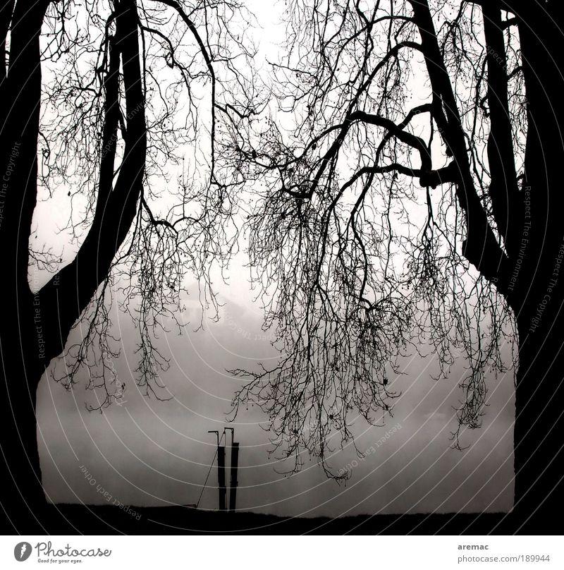 Ruhephase Natur weiß Baum Pflanze Winter ruhig schwarz Herbst Landschaft Nebel Fluss Ast Flussufer Zweig schlechtes Wetter Morgendämmerung