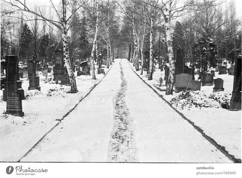 Friedhof Wege & Pfade Schnee Schneefall Winter Grab Grabmal Linie gerade geradeaus Fußweg staunen wandern fantastisch Wandertag laufen Spaziergang Grabsteine