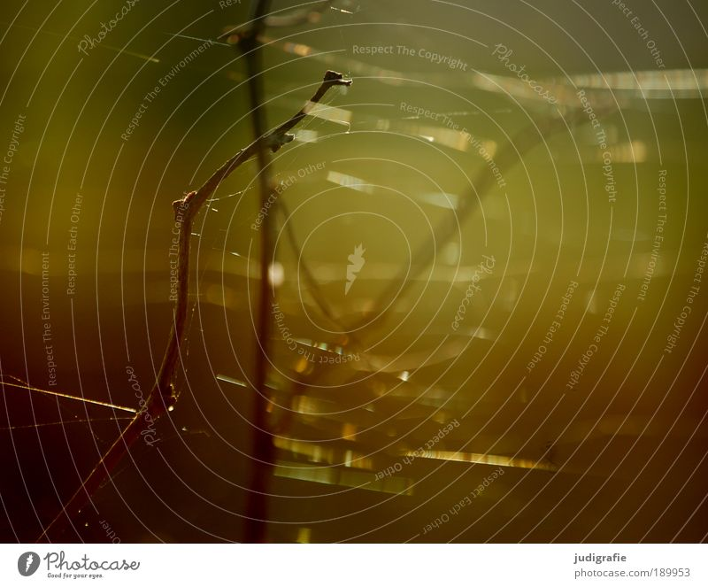 Versponnen Umwelt Natur Pflanze Sonnenlicht Sommer Spinne fein zart Spinngewebe Zweig Indian Summer Warme Farbe Wärme Farbfoto Außenaufnahme Detailaufnahme Tag
