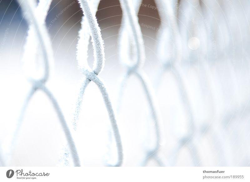 Maschendrahtwinter weiß Winter Einsamkeit Schnee Garten Freiheit Park Eis Wetter Sicherheit Ordnung Frost Schutz Klima entdecken Stahl